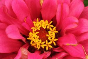 bright_flower
