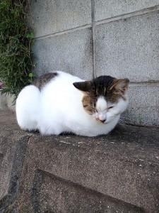 sleepy_kitty